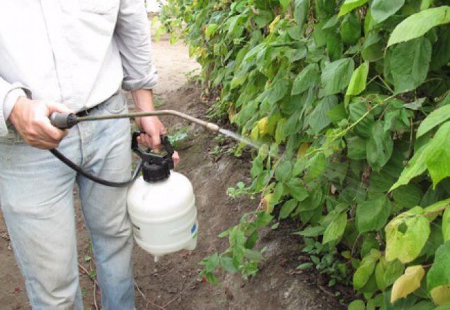 Bicarbonat de sodiu insecticid