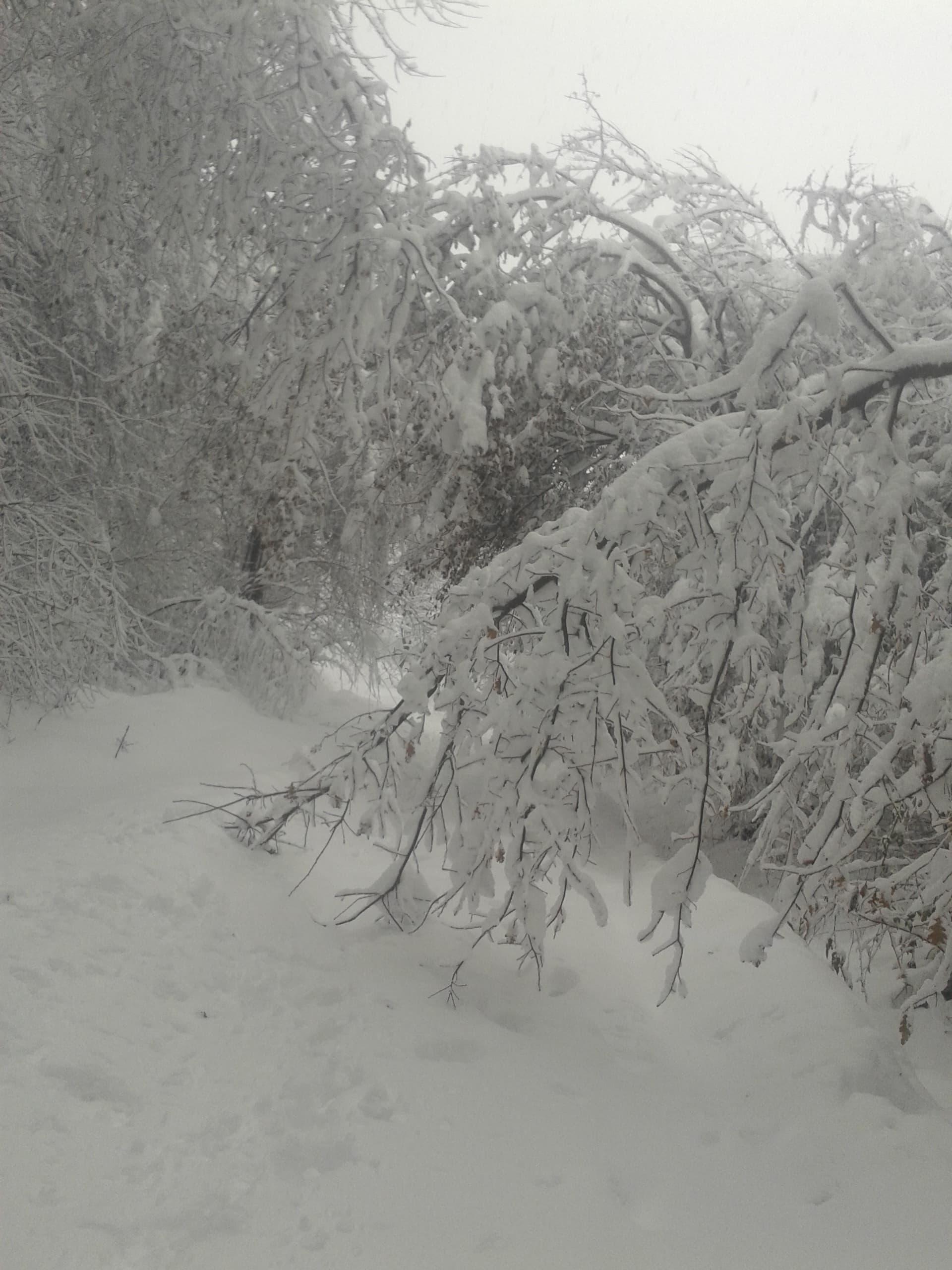 plimbare desculț în zăpadă în varicoză baza de petrol în varicoză